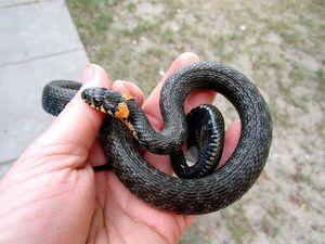 Встреча со змеей. Ярмарка Мастеров - ручная работа, handmade.