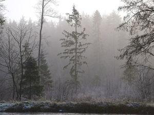 С Добрым Утром!!!! Сегодня ясная солнечная погода, а с утра был туман.... Ярмарка Мастеров - ручная работа, handmade.