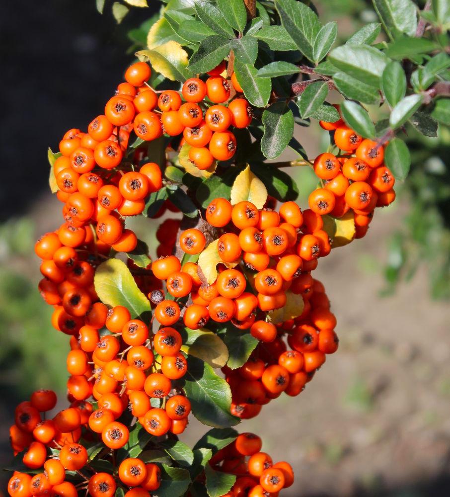 яркая ростовская Осень, фото № 15