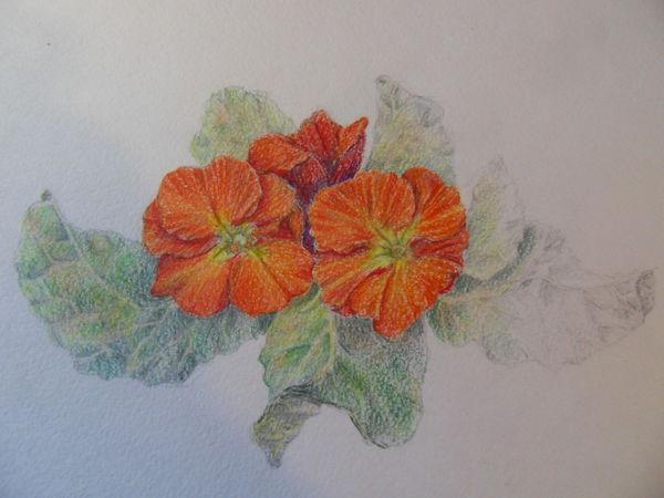 Ботанический рисунок   Ярмарка Мастеров - ручная работа, handmade