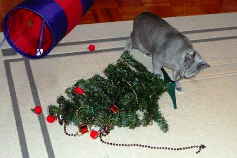 Christmas Cats! And a Little About the Safety of Pets During the Holidays, фото № 17