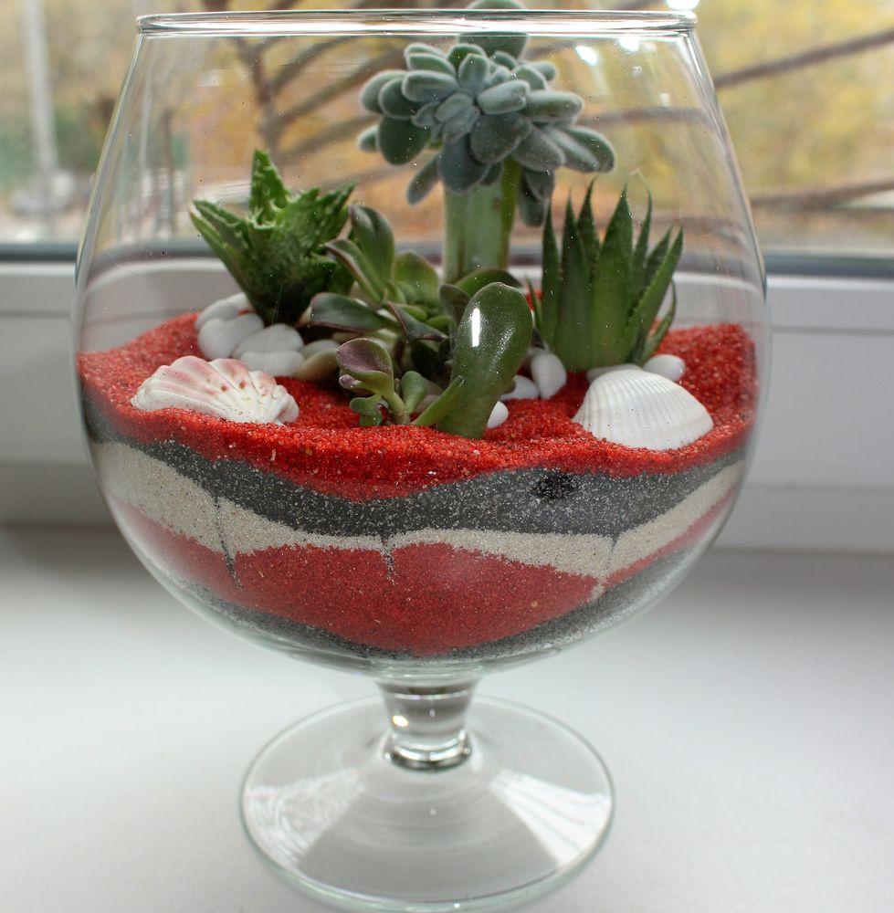 флорариум, растения