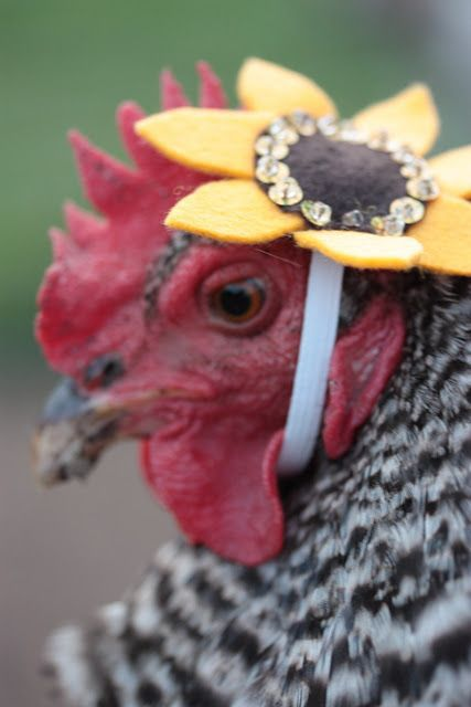 Flower Chicken Fashion