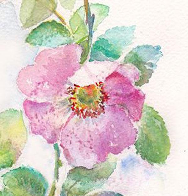 новое поступление, цветы, акварельная живопись