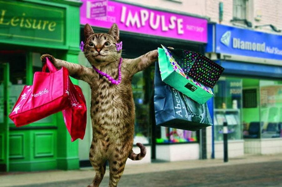 картинки кошки в магазине используется