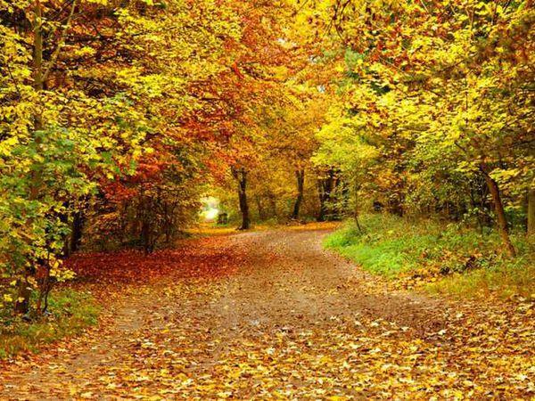 Аукцион!!! Самарские сезонь. Осень. Последний день!!! | Ярмарка Мастеров - ручная работа, handmade