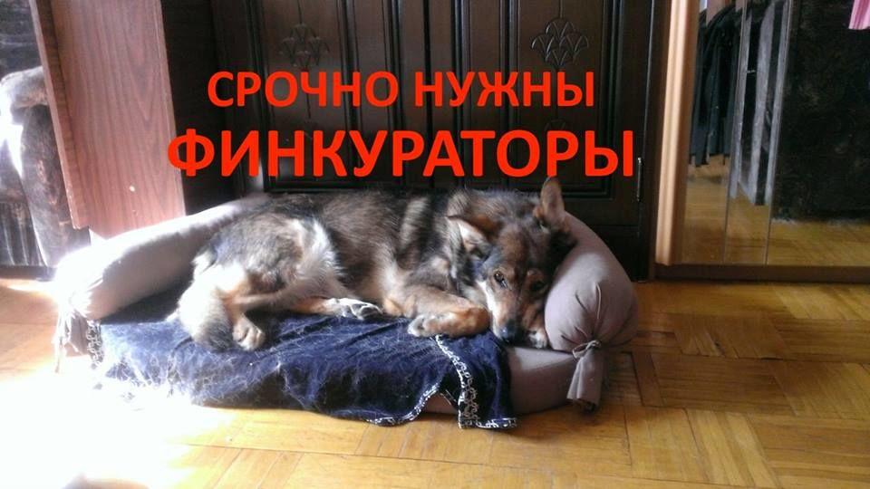 помощь собаке, собаке нужна помощь, никифор кожухово, бездомные животные