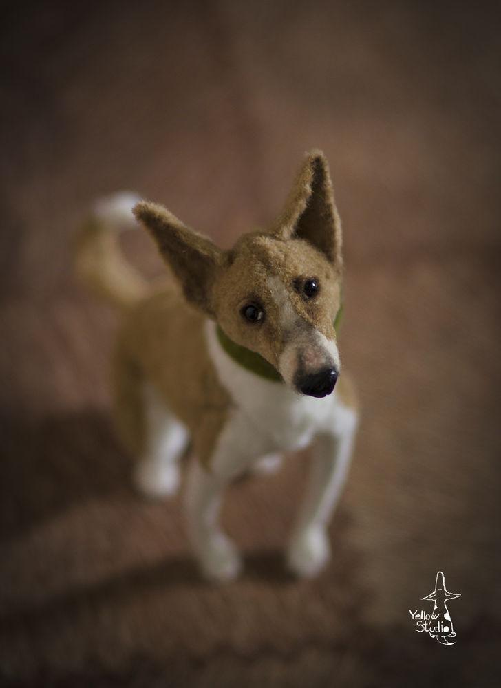 Моня собак, фото № 6