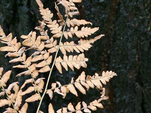 Осень разлила краски.... Ярмарка Мастеров - ручная работа, handmade.