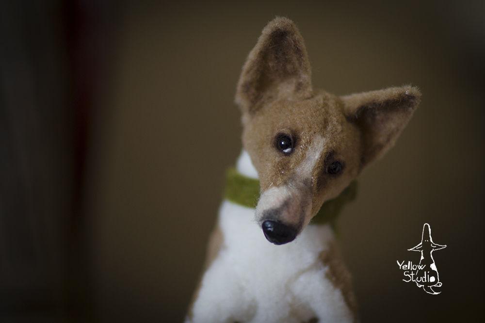 Моня собак, фото № 11