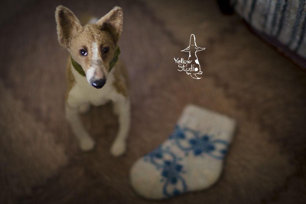 Моня собак, фото № 10
