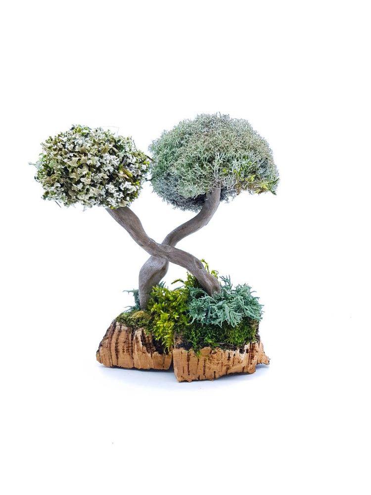 декоративное деревце, лишайник, подарок начальнику, подарок от коллектива, художественная работа, эстетичный подарок