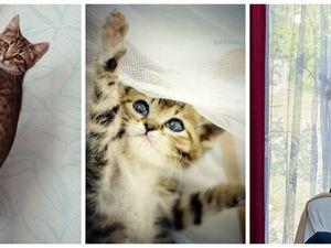 Отучаем кошек лазить по шторам&#x3B;). Ярмарка Мастеров - ручная работа, handmade.