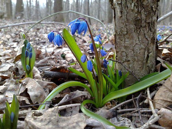 Весна- пора цветения. Новинки уже в магазине! | Ярмарка Мастеров - ручная работа, handmade