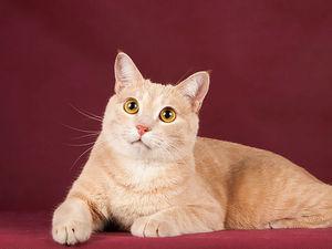 Красавцы-коты — ищут местечко в сердце и доме!. Ярмарка Мастеров - ручная работа, handmade.