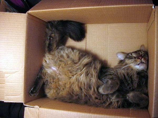 коробки коты