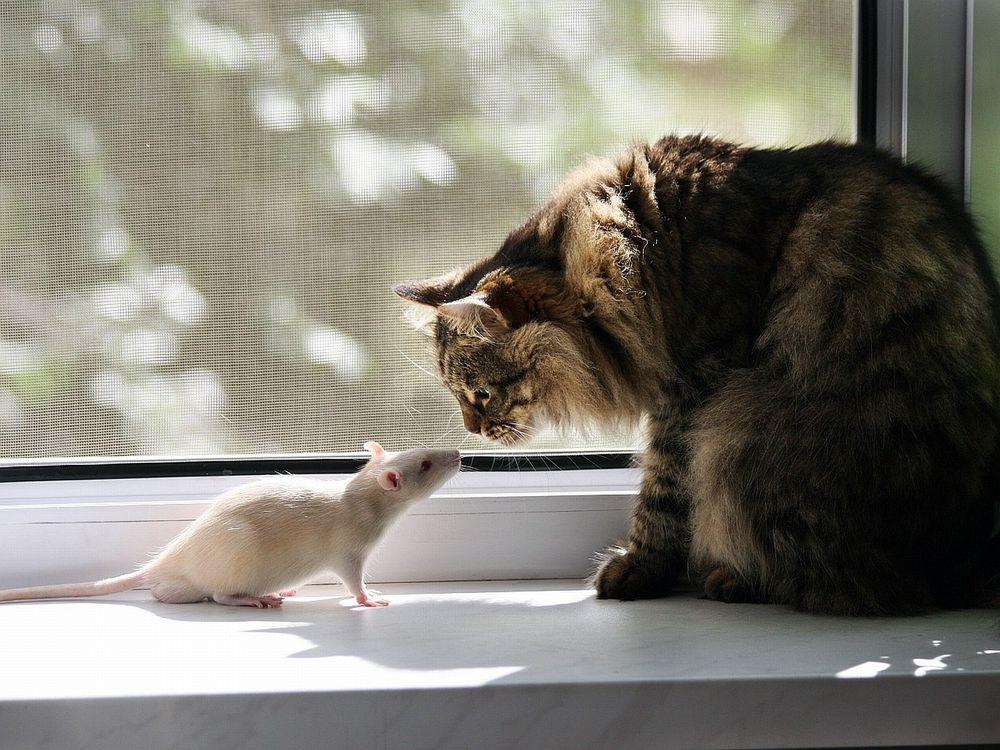 стоит препятствовать картинки про кошку и мышку современное