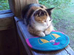 Котики как вдохновение для творчества. Ярмарка Мастеров - ручная работа, handmade.