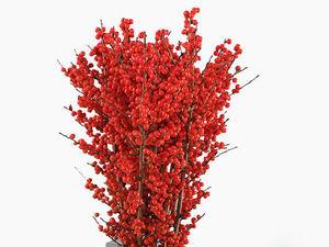 Ветки свежие с ягодами Илекс 40-90см. Принимаю заказы до 17 декабря. На 23 декабря.. Ярмарка Мастеров - ручная работа, handmade.