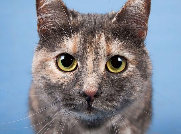 кот, доброта