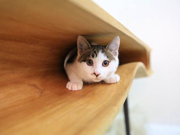 CATable — стол для котов и их хозяев | Ярмарка Мастеров - ручная работа, handmade