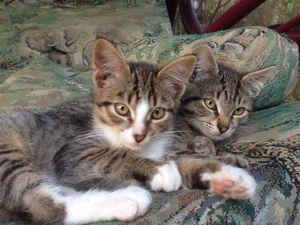 Друзья! Котятам не выжить на даче зимой. Помогите пристроить пожалуйста!. Ярмарка Мастеров - ручная работа, handmade.