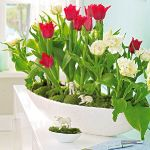 spring-flowers-new-ideas-tulip2-14.jpg