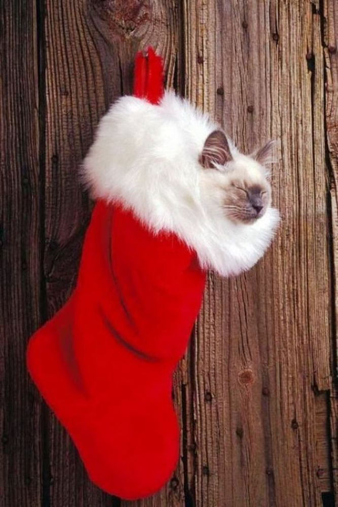 Christmas Cats! And a Little About the Safety of Pets During the Holidays, фото № 20
