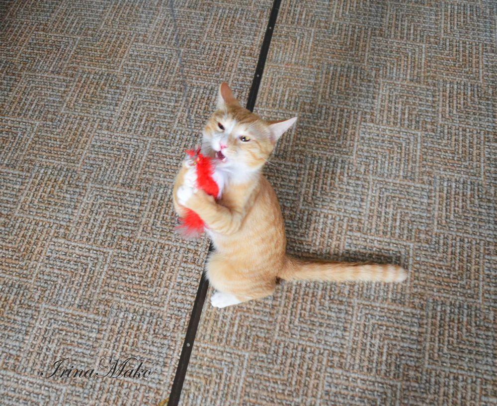 Котячьи поигрушки, фото № 9
