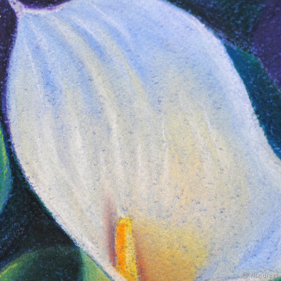 Рисуем пастелью изящный цветок каллы, фото № 12