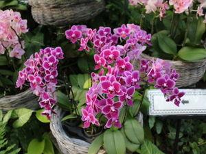 Природа, цветы и море Окинава Япония. Ярмарка Мастеров - ручная работа, handmade.