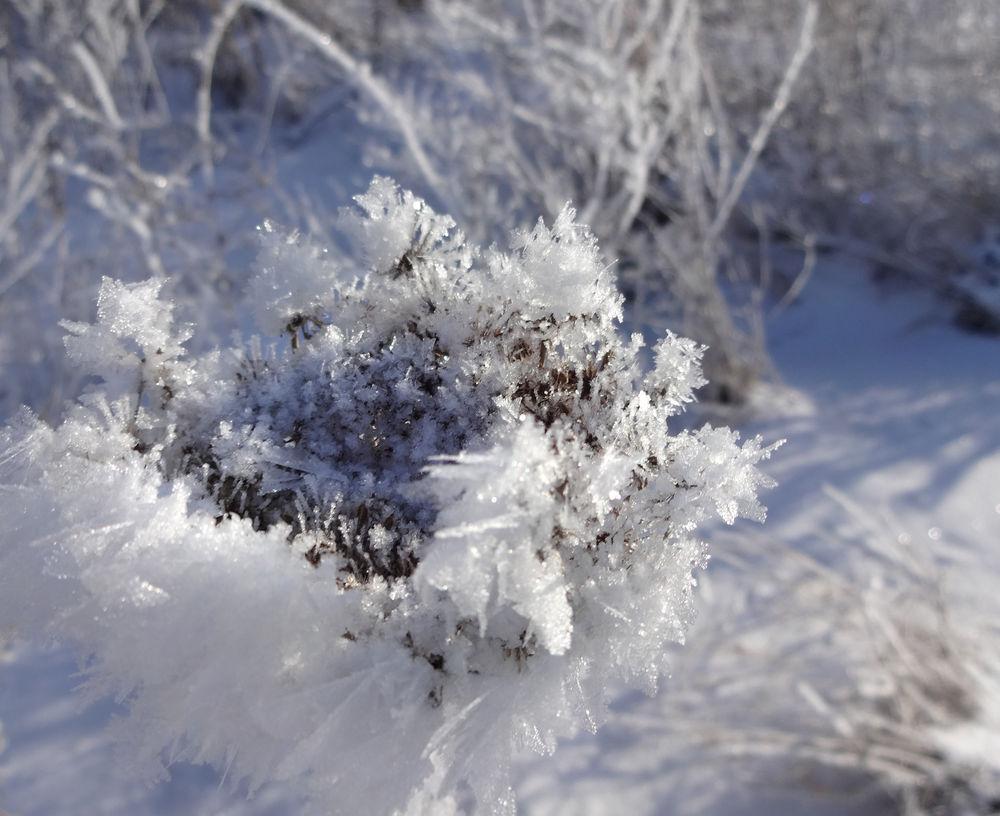 зимние снимки