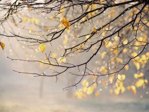 Дождь, ветер...утро субботы. | Ярмарка Мастеров - ручная работа, handmade