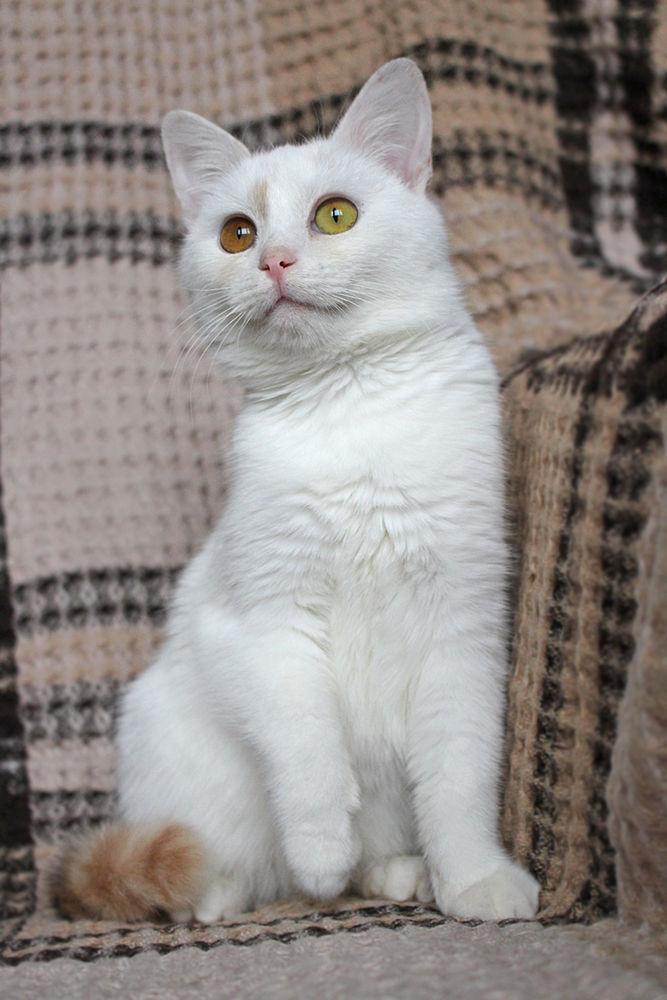 кошка, кошка трехцветка, кошка из шерсти, игрушка из шерсти, кошка майя