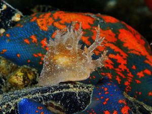 Ныряем глубже: фантастические формы и краски жителей морских глубин как источник вдохновения. Ярмарка Мастеров - ручная работа, handmade.