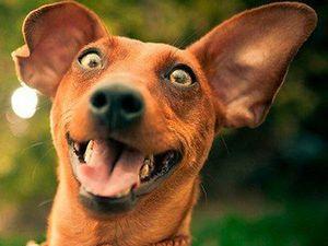 16 февраля 2018 года наступит год Собаки по китайскому календарю!!! Не забудьте купить подарок!!!. Ярмарка Мастеров - ручная работа, handmade.