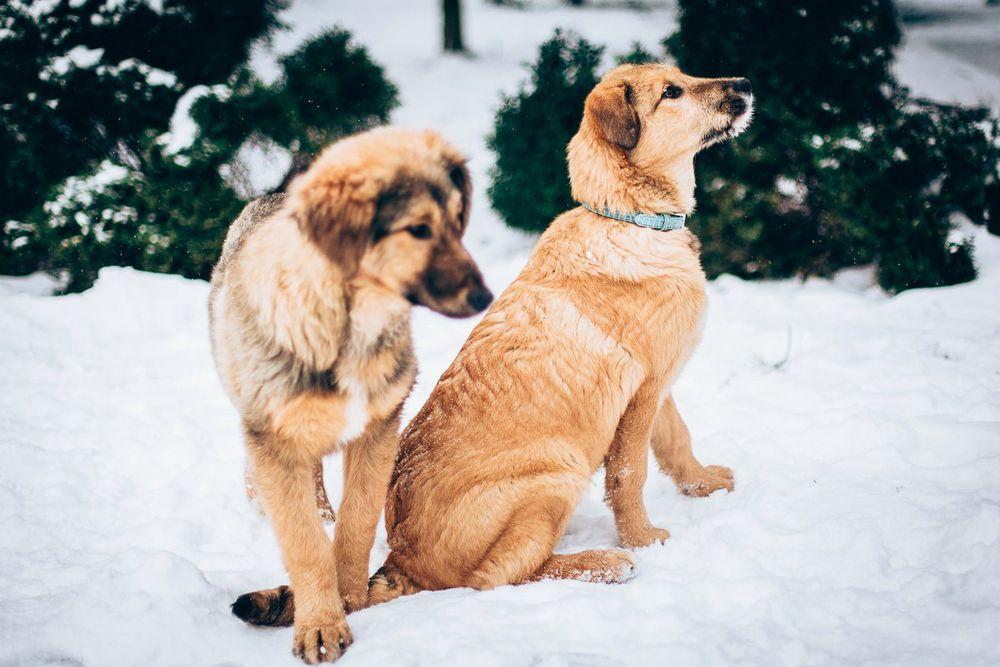щенок в дар, возьму щенка