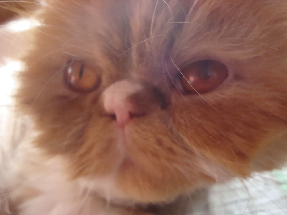 кошка, стрижка у кота