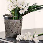 spring-flowers-new-ideas-narcissus6.jpg