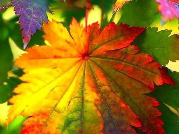 Осень-великий вдохновитель!!! | Ярмарка Мастеров - ручная работа, handmade