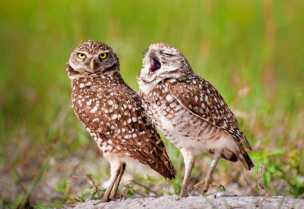 12 самых смешных фото зверей 2018 года: финалисты Comedy Wildlife Photography Awards