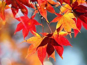 Прекрасная осень. Ярмарка Мастеров - ручная работа, handmade.