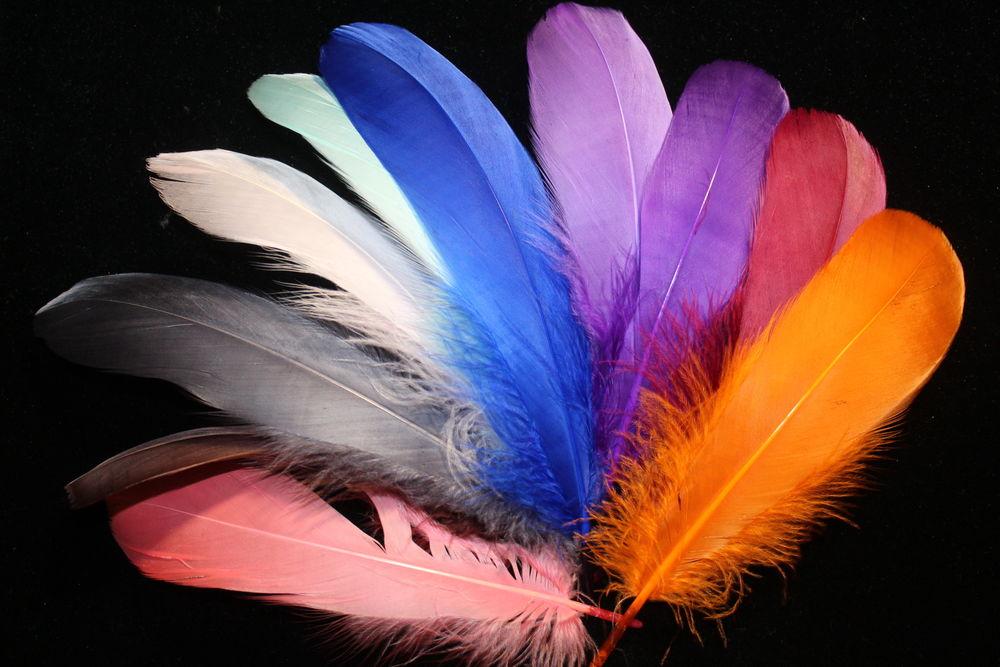 перья, перья птиц, перья для декора, перья для украшений, перо, гусиное перо, материалы для творчества, материалы для рукоделия, артмотив, ловец снов, ловцы снов, лови момент, ловушка снов, ловец сновидений, ловушка для снов, ловушка сновидений, своимируками, зеленоград, москва, химки