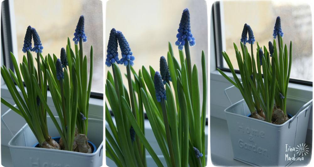 подарок, поздравляю, весна, распродажа, живые цветы, весеннее настроение