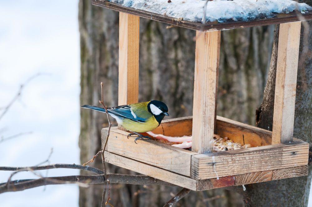 кормушка для птиц, синички, птицы