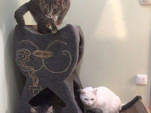 Как чистить (видео) гофрокартоную когтеточку  и когда делаешь дом для своих котов ... и не доделываешь его). Ярмарка Мастеров - ручная работа, handmade.