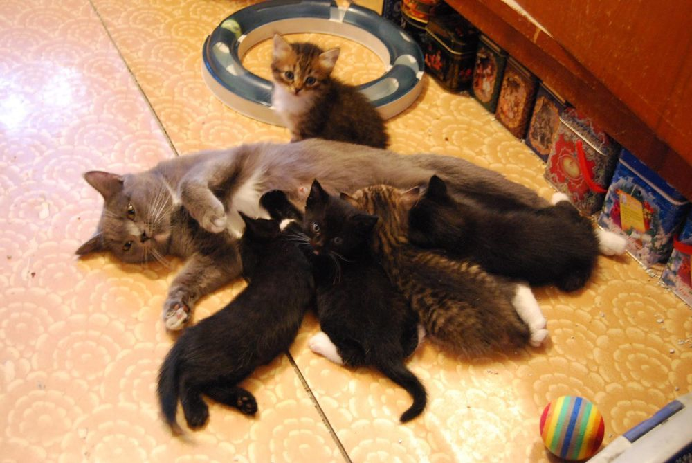 котята ищут дом, котята в добрые руки