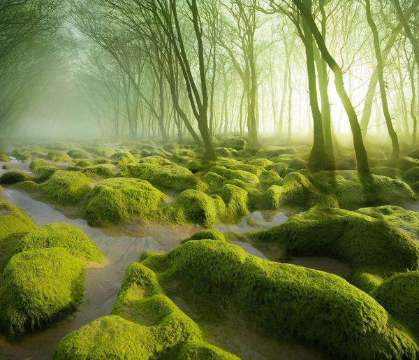 Краски природы: 49 впечатляющих фотографий, фото № 26