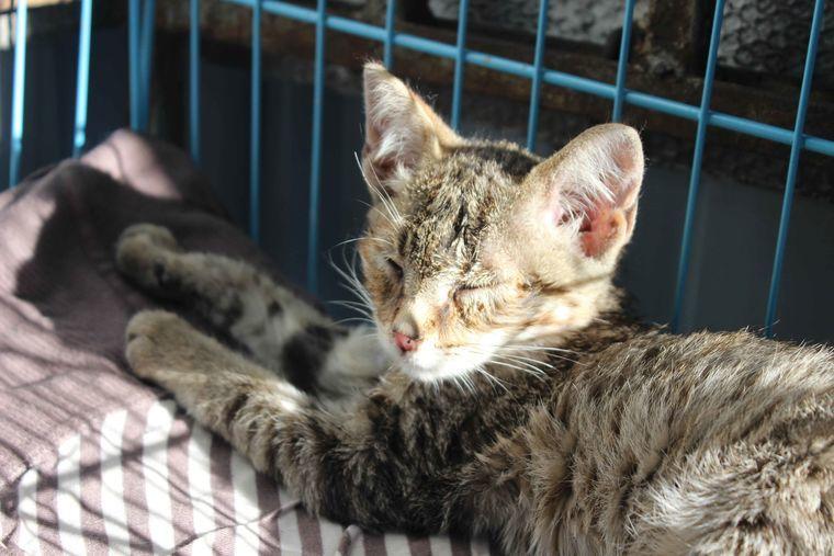 кот, бездомные животные