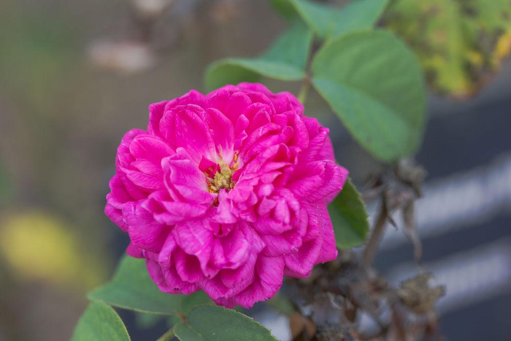 война алой и белой розы, винтажная бижутерия сша